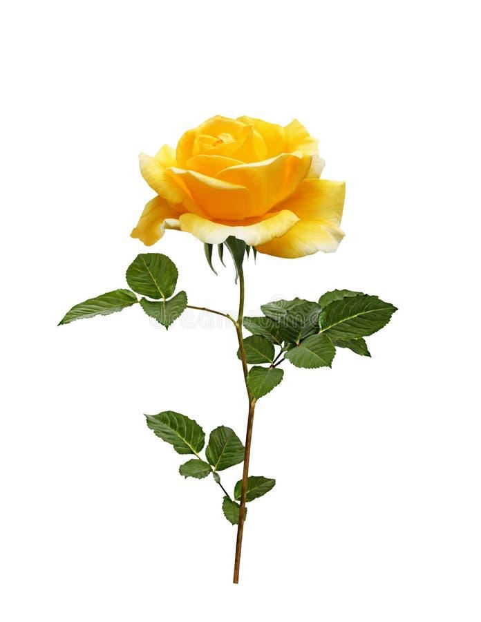 Piękny kolor żółty malujący wzrastał z liśćmi ilustracji