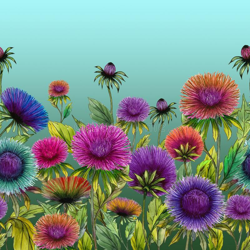 Piękny kolorowy aster kwitnie z zielonymi liśćmi na błękitnym tle bezszwowy kwiecisty wzoru adobe korekcj wysokiego obrazu photos ilustracja wektor