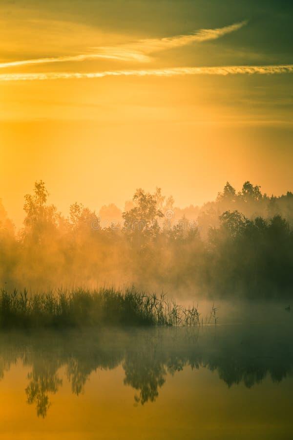 Piękny, kolorowy krajobraz mglisty bagno podczas wschodu słońca, Atmosferyczna, spokojna bagna sceneria z słońcem, zdjęcia royalty free