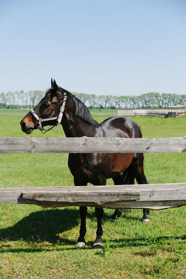 Piękny konia gospodarstwo rolne, lato krajobraz obrazy royalty free