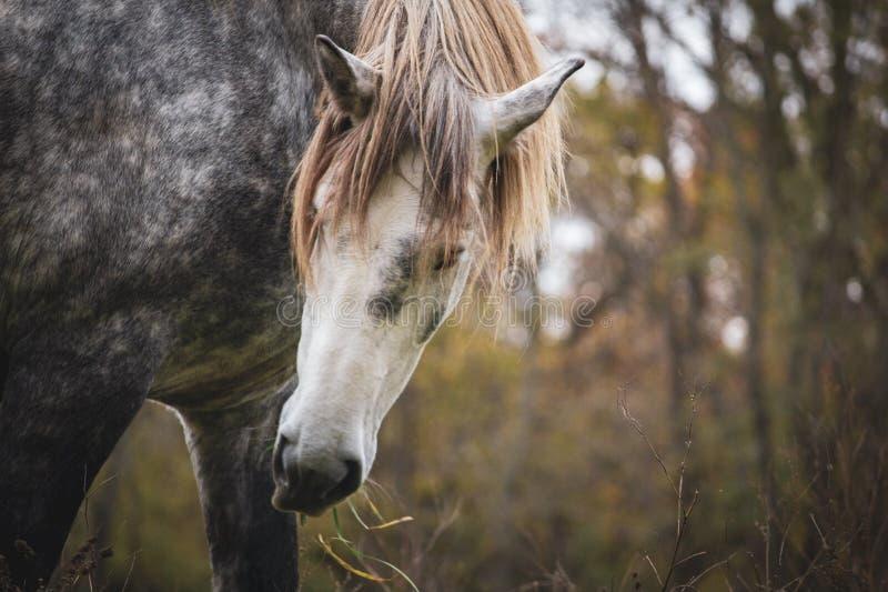 Piękny konia pozować zdjęcia royalty free