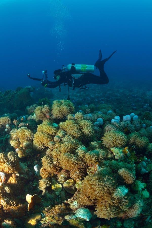 Piękny koral w Koh Tao, Tajlandia zdjęcie stock