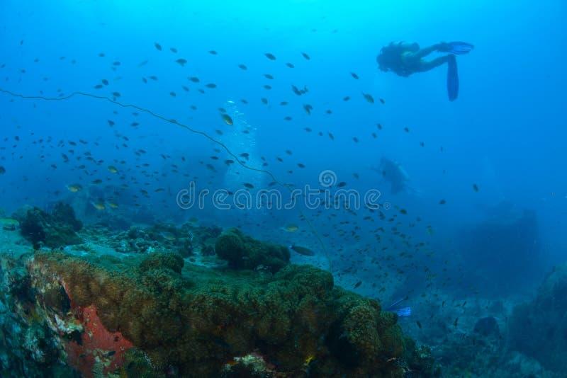 Piękny koral w Koh Tao, Tajlandia zdjęcia royalty free