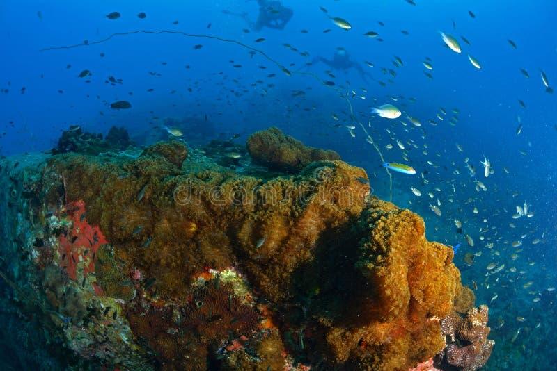 Piękny koral w Koh Tao, Tajlandia obrazy royalty free