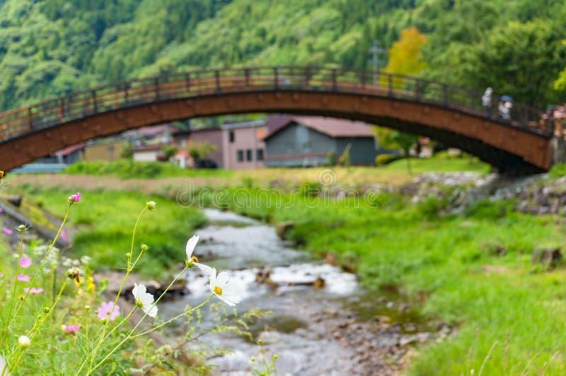 Piękny kosmos kwitnie z widokiem historyczny Duży most w Kis fotografia stock