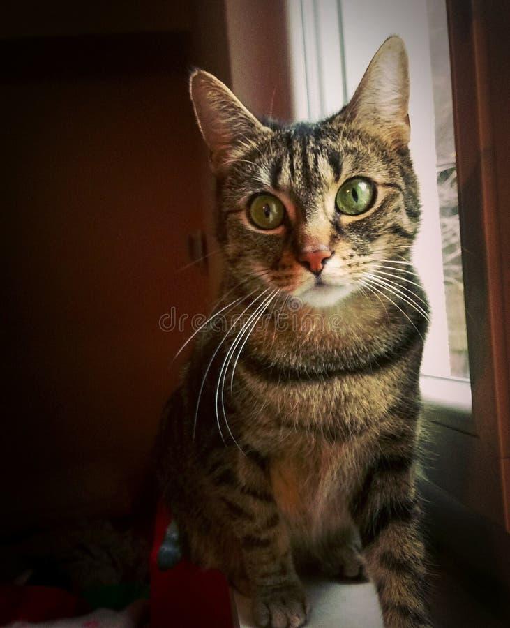 piękny kot obraz stock