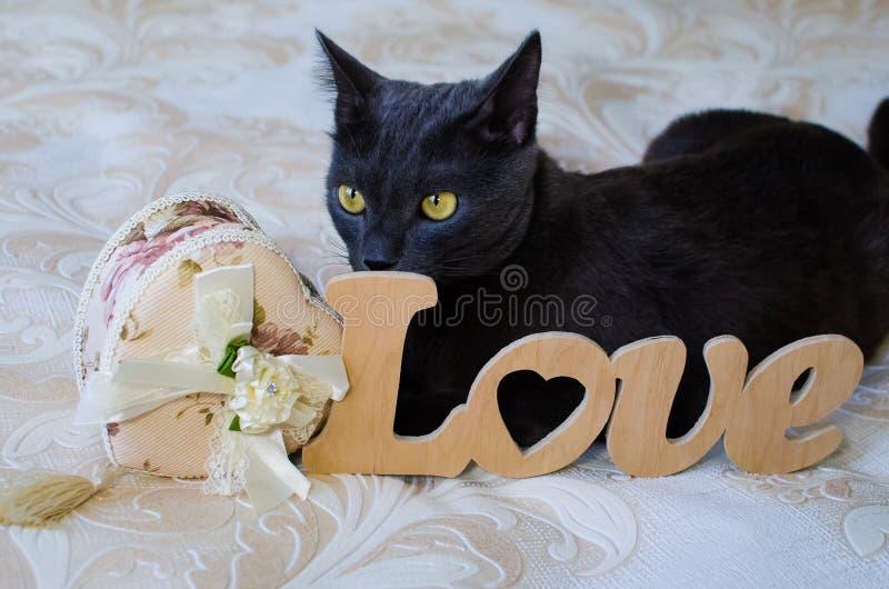 Piękny kot dla jego dziewczyny obraz stock