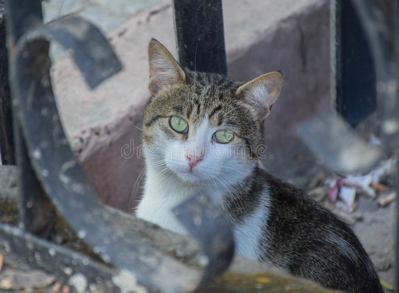 Piękny kot pozuje outdoors zdjęcie royalty free