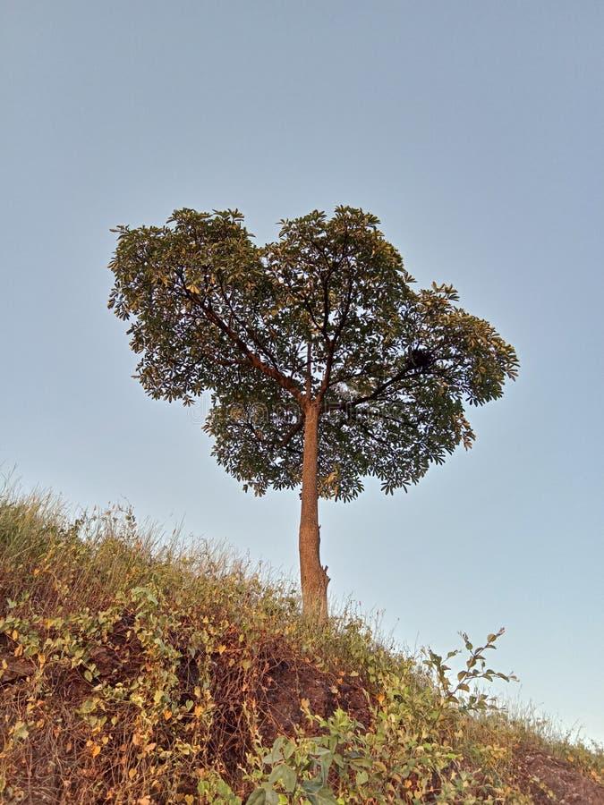 Piękny krajobraz drzewo obrazy royalty free