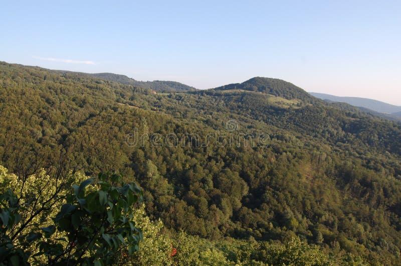Piękny krajobraz, drzewo, las i góry przy Grza, Serbia zdjęcie royalty free
