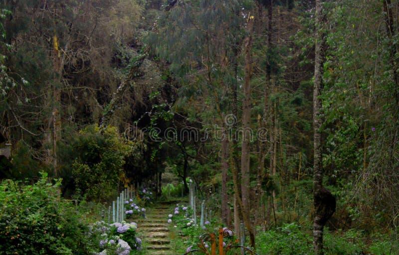 Piękny krajobraz kroki na wzgórza kodaikanal obrazy stock