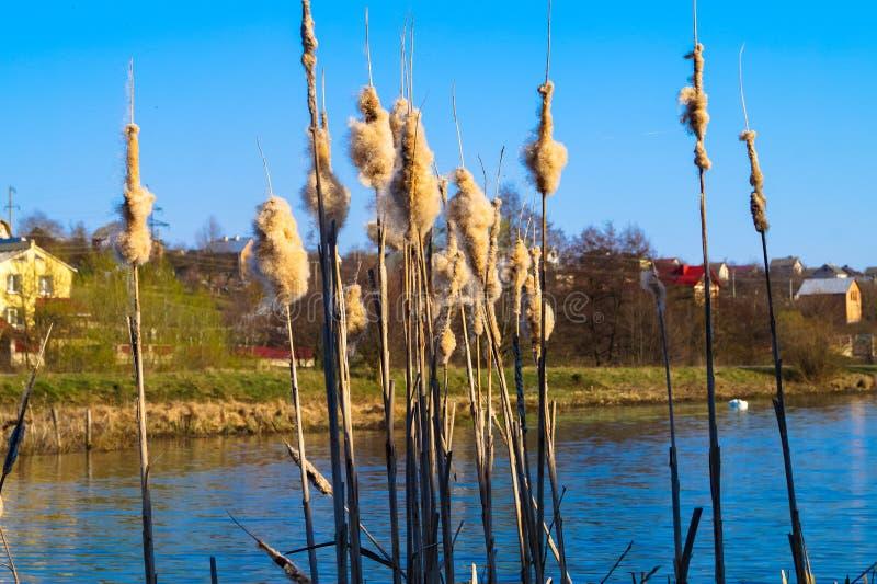 Piękny krajobraz na jeziornym outside miasteczko fotografia royalty free