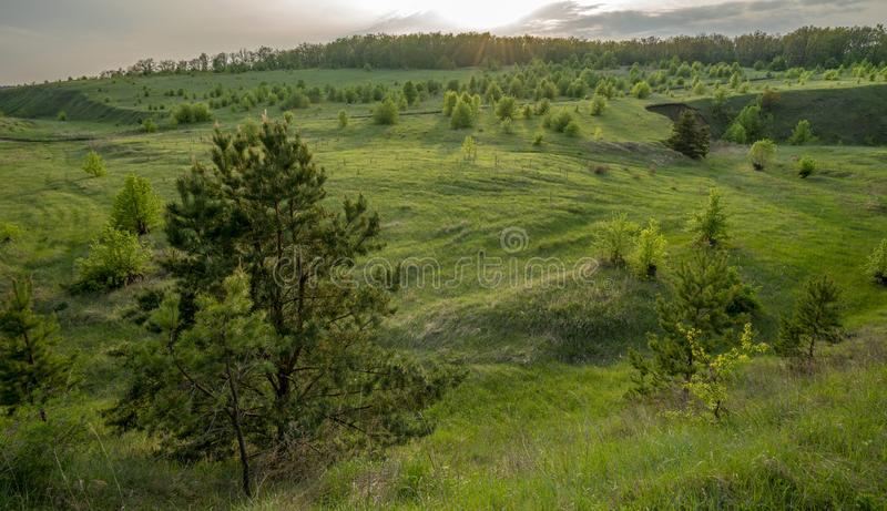 Piękny krajobraz przy zmierzchem w wąwozie, sosna, brzoza, trawa obraz royalty free