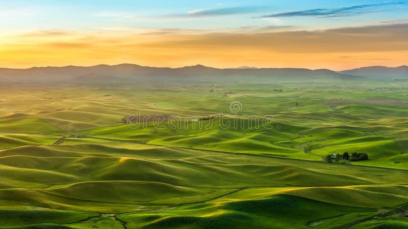 Piękny krajobraz uprawy pole w Palouse w ranku zdjęcia royalty free