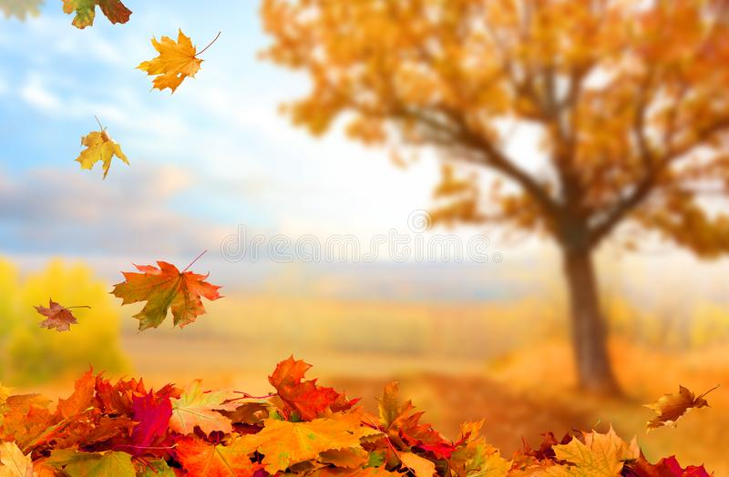 Piękny krajobraz z żółtymi drzewami, zieloną trawą i słońcem, colo obraz stock