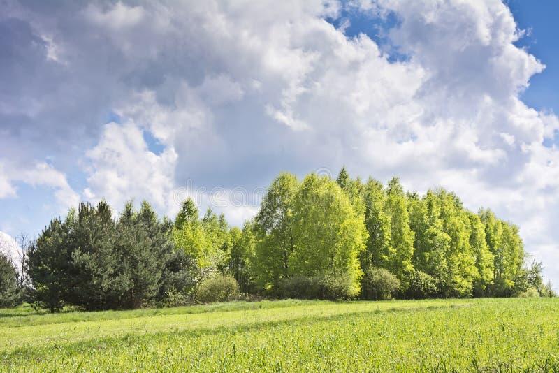 Piękny krajobraz z brzozami i bielem chmurnieje na niebieskim niebie obraz stock