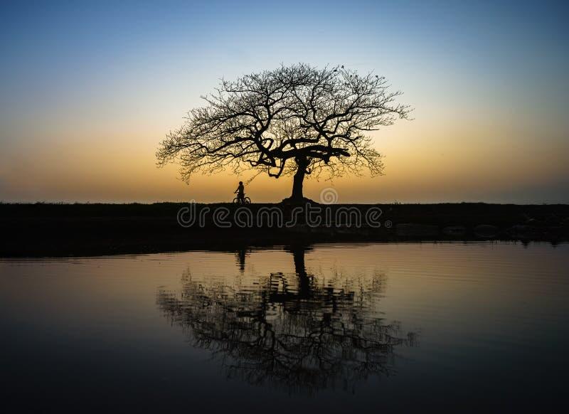 Piękny krajobraz z drzewną sylwetką i odbicie przy zmierzchem z samotną dziewczyną i rowerem pod drzewem zdjęcia royalty free