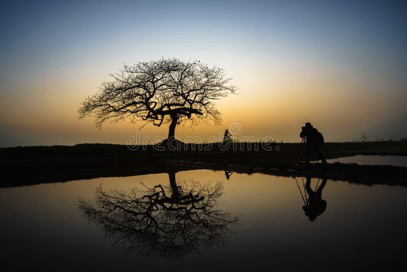Piękny krajobraz z drzewną sylwetką i odbicie przy zmierzchem z samotną dziewczyną i rowerem pod drzewem zdjęcie royalty free