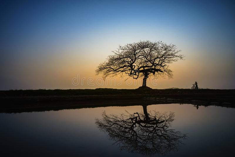 Piękny krajobraz z drzewną sylwetką i odbicie przy zmierzchem z samotną dziewczyną i rowerem pod drzewem obraz royalty free