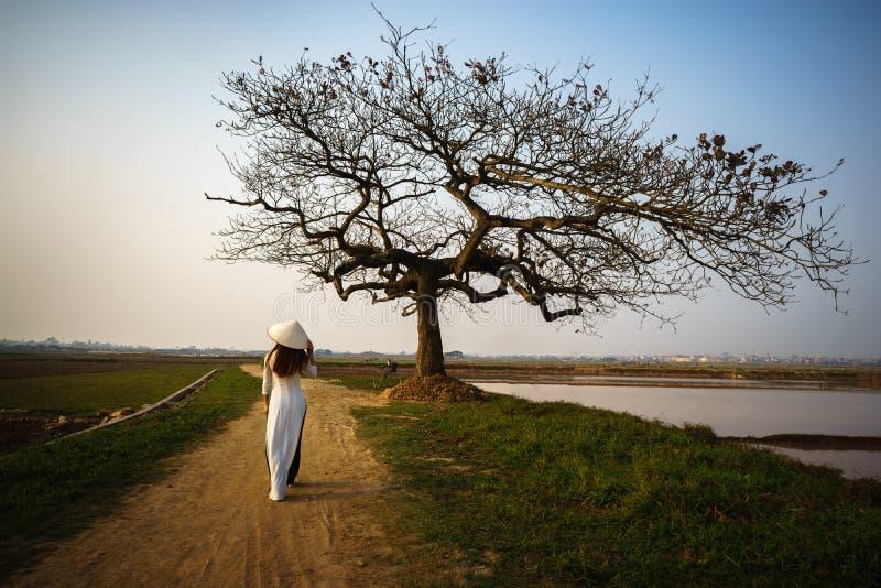 Piękny krajobraz z drzewo sylwetką przy zmierzchem z Wietnamską kobietą jest ubranym tradycyjną suknię Ao Dai chodzi samotnie pod zdjęcia royalty free