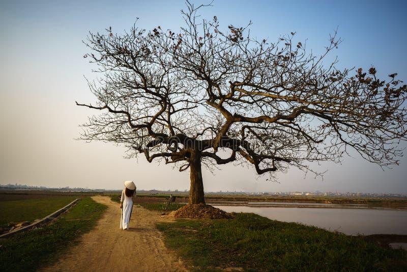 Piękny krajobraz z drzewo sylwetką przy zmierzchem z Wietnamską kobietą jest ubranym tradycyjną suknię Ao Dai chodzi samotnie pod obraz stock