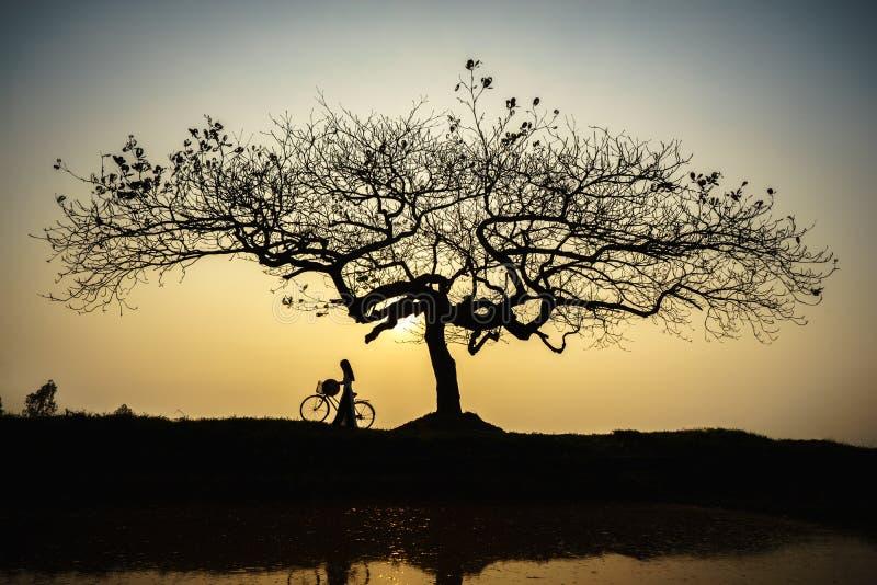 Piękny krajobraz z drzewo sylwetką przy zmierzchem z Wietnamską kobietą jest ubranym tradycyjną sukni Ao Dai pozycję pod drzewem fotografia stock