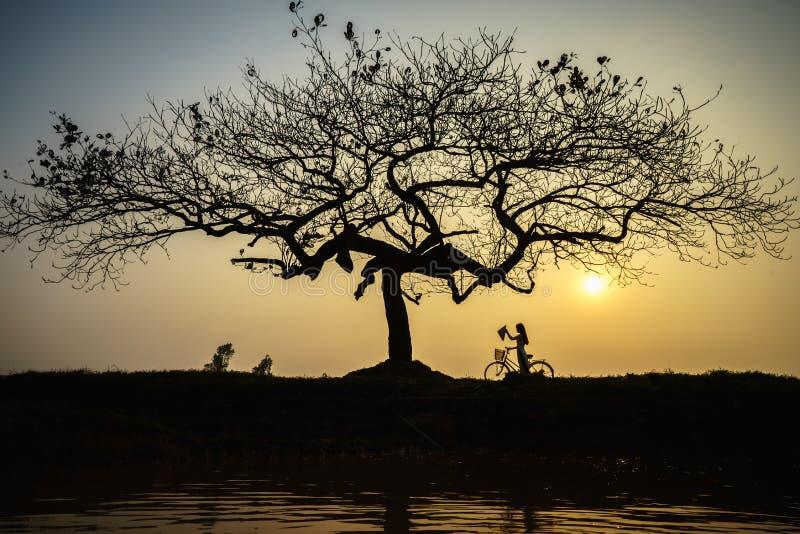 Piękny krajobraz z drzewo sylwetką przy zmierzchem z Wietnamską kobietą jest ubranym tradycyjną sukni Ao Dai pozycję pod drzewem zdjęcie royalty free