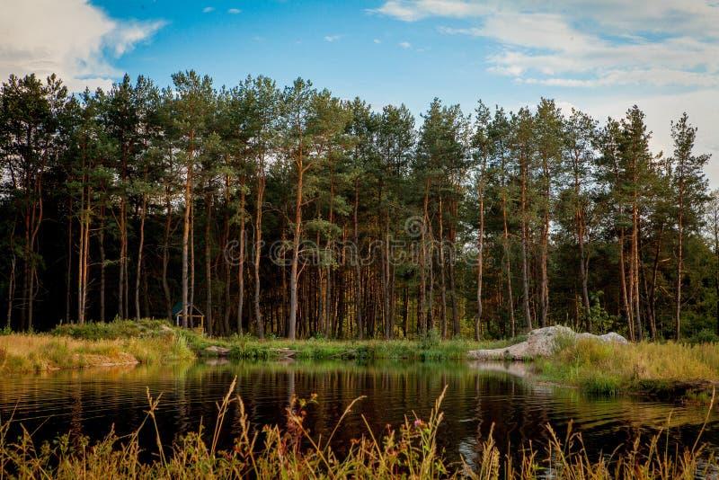 Piękny krajobraz z lasowym pobliskim jeziorem Campingowy sezon obraz royalty free
