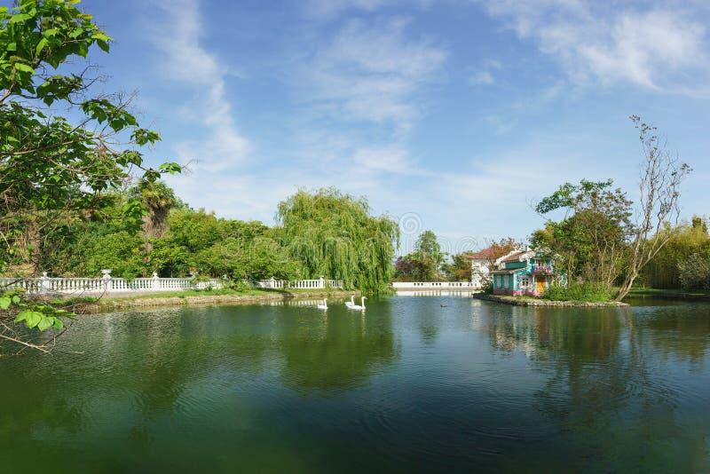 Piękny krajobraz z niemową na dużym stawie miasto park południowy zdroju miasteczko zdjęcia royalty free