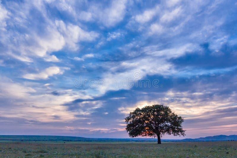 Piękny krajobraz z osamotnionym dębowym drzewem w dramatycznych chmurach i zmierzchu zdjęcie royalty free