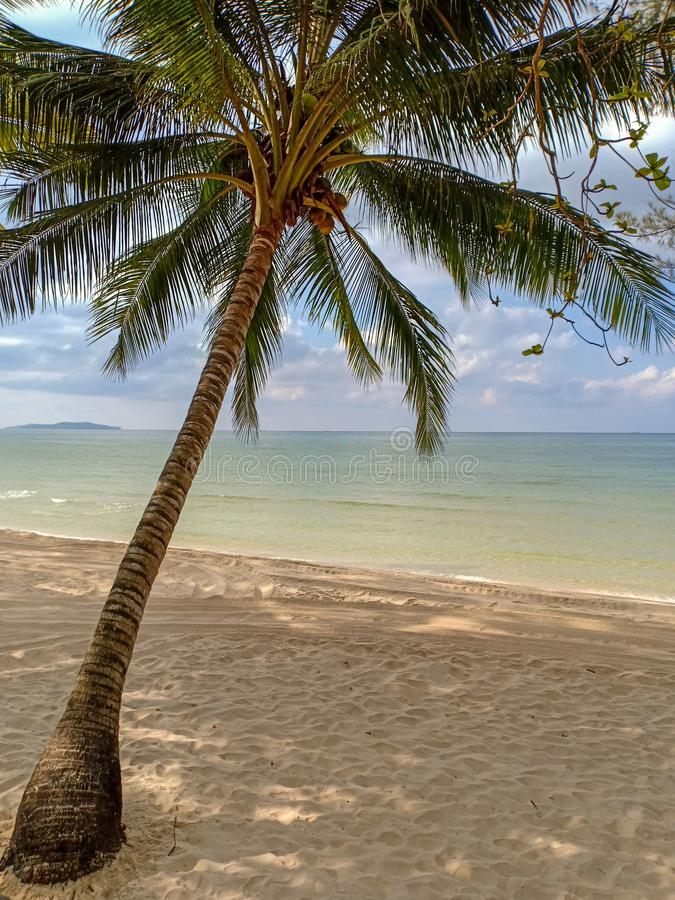 Piękny krajobraz z samotnym kokosowym drzewem obrazy stock