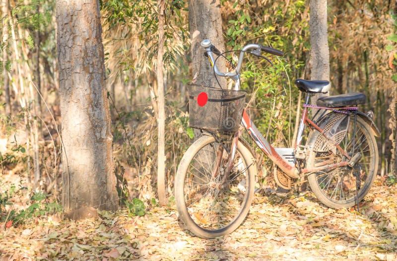 Piękny krajobrazowy wizerunek z bicyklem zdjęcie royalty free