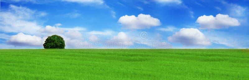 piękny krajobrazu samotne drzewo obrazy stock