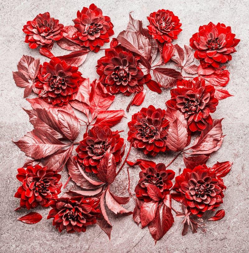 Piękny kreatywnie czerwony jesień liści i kwiatów układu komponować Kwiecisty spadku wzór, mieszkanie nieatutowy zdjęcia stock
