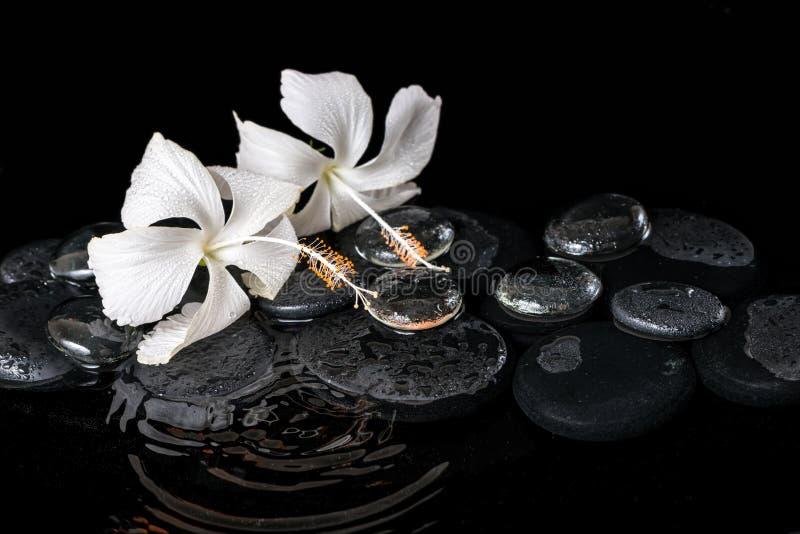 Piękny kriogeniczny zdroju pojęcie delikatny biały poślubnik, zen obrazy stock