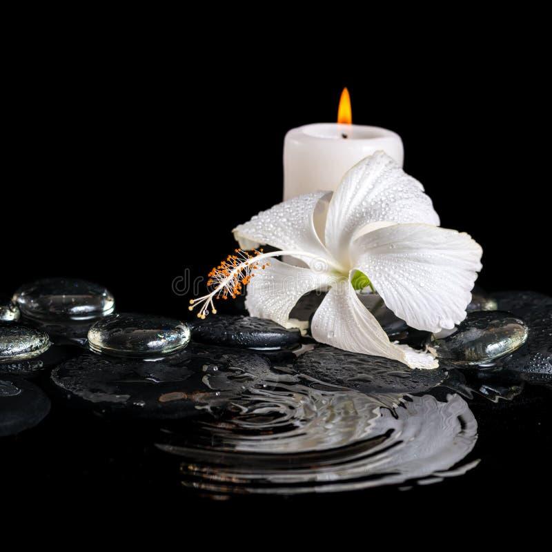 Piękny kriogeniczny zdroju pojęcie delikatny biały poślubnik, zen obrazy royalty free