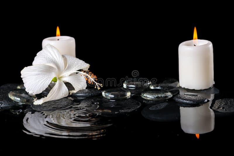 Piękny kriogeniczny zdroju pojęcie delikatny biały poślubnik, zen obraz royalty free