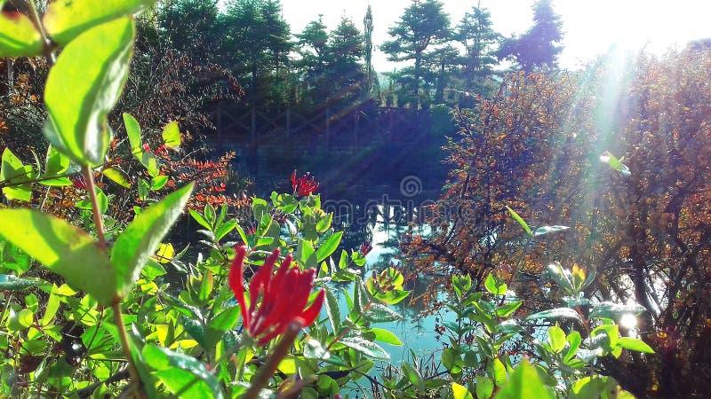Piękny krzak kwitnie w jesieni na brzeg jezioro obraz stock