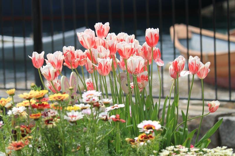 piękny kwiat zdjęcie stock