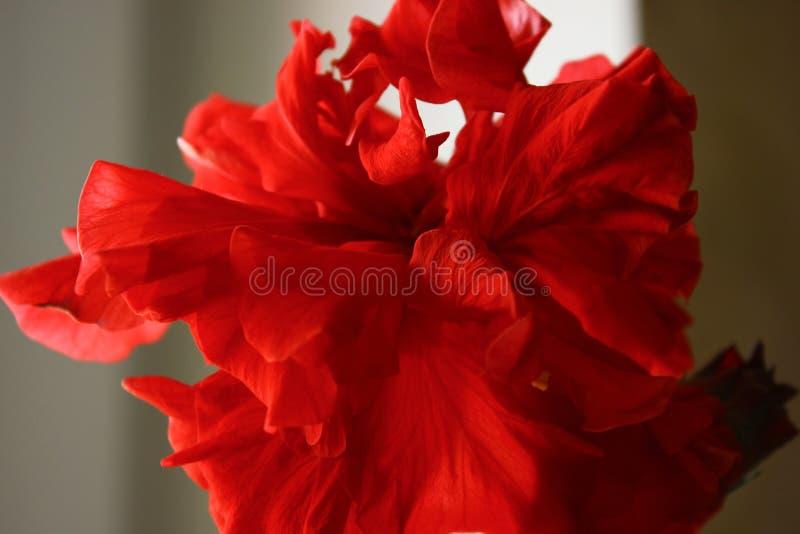 Piękny kwiat czaruje obrazy royalty free
