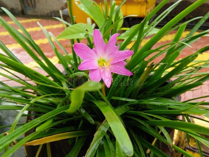 Piękny kwiat i wp8lywy powiązanie między naturą zdjęcie royalty free
