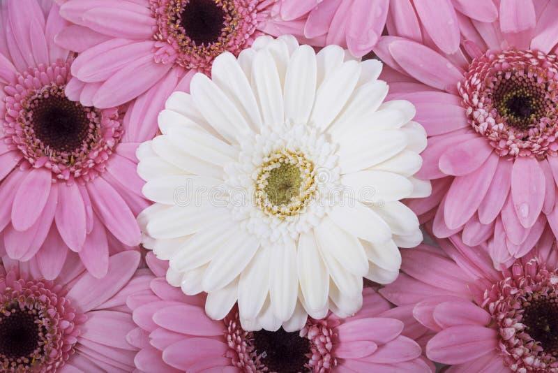 piękny kwiat preparatów obraz stock