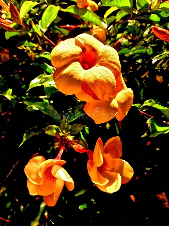 Piękny kwiat przy nocą zdjęcie royalty free