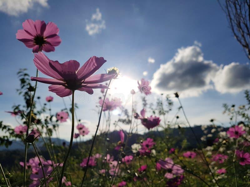 Pi?kny kwiat w ??ce obraz stock