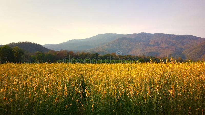 Piękny kwiat w Maehae gospodarstwie rolnym przy chiangmai Thailand zdjęcia stock