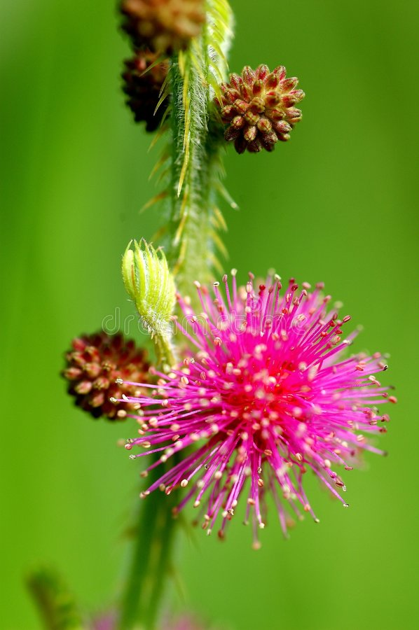 piękny kwiat wilder makro obrazy royalty free