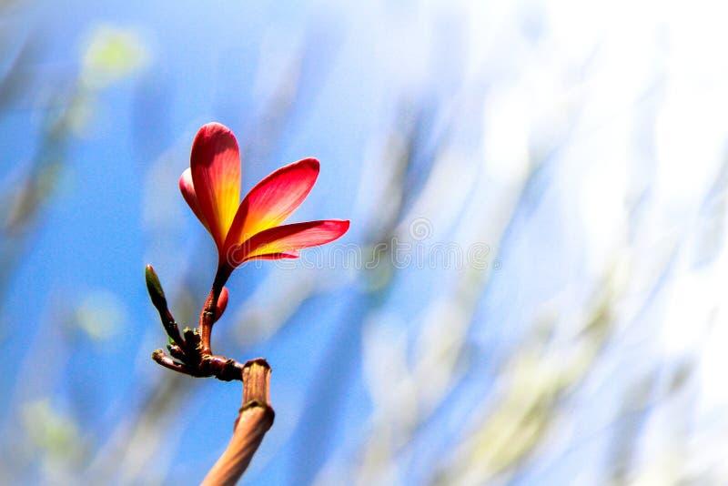 Piękny kwiatu kwiat w parku obrazy royalty free