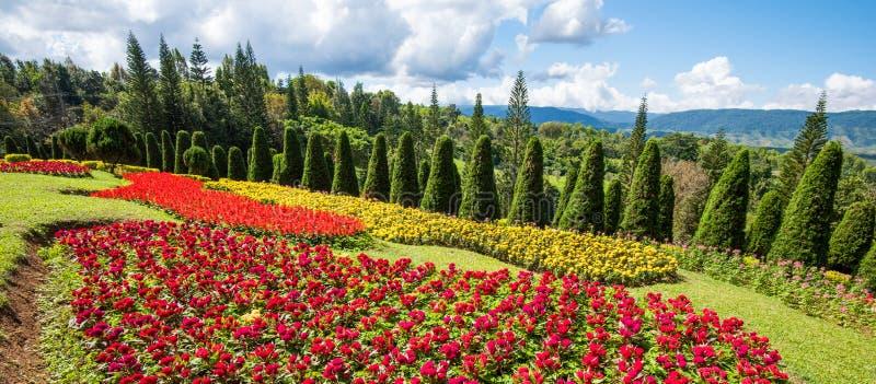 Piękny kwiatu ogród kolorowy zdjęcia royalty free