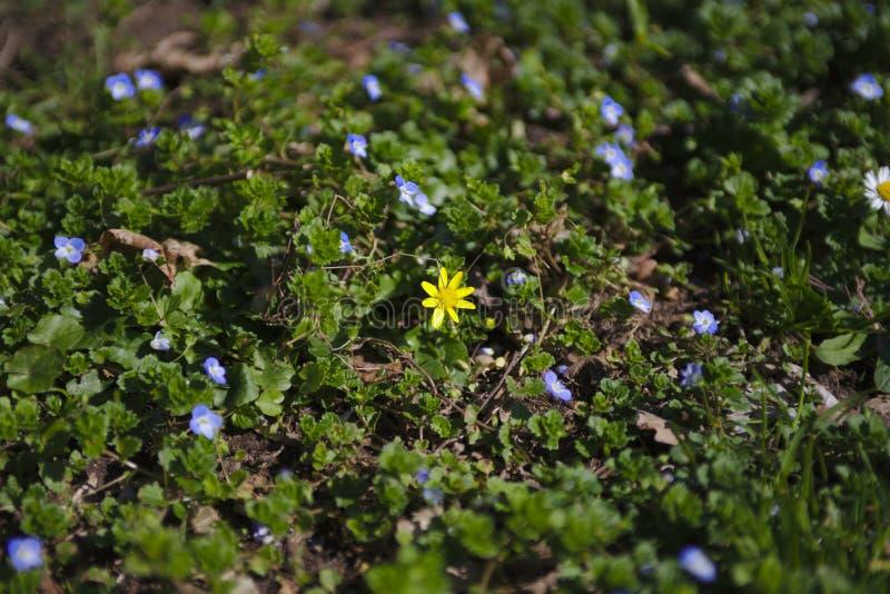 Piękny kwiatu pole w czarnym drewnianym lesie fotografia stock
