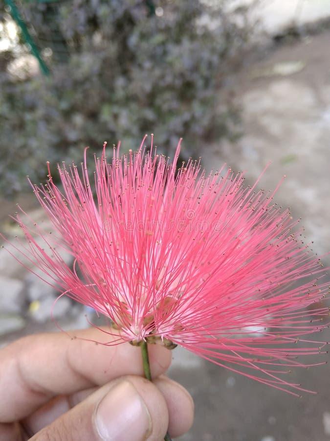 Piękny kwiatu stuknięcie dla ciebie obraz stock